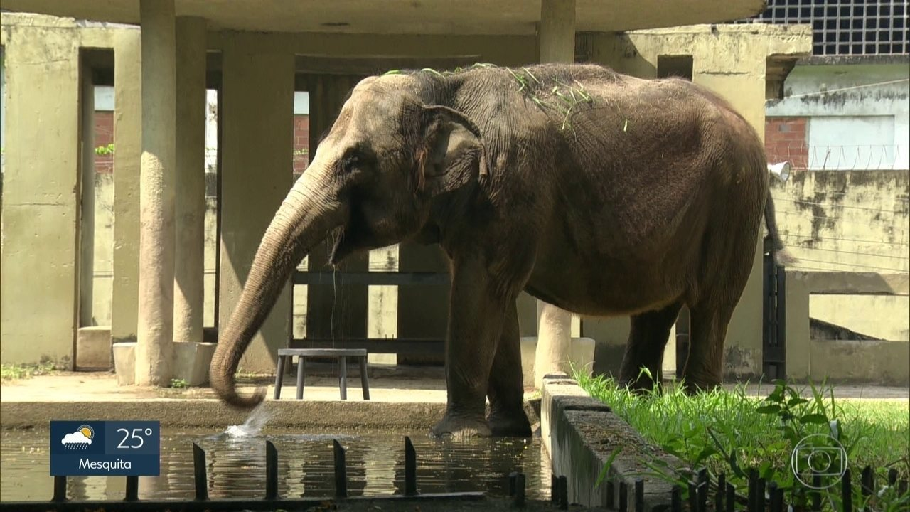 Comissão da Câmara investiga morte e furtos de animais no zoo do Rio