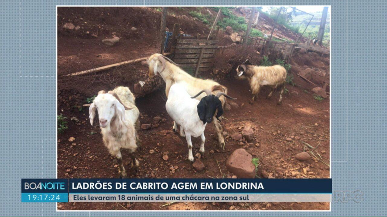 Polícia procura ladrões de cabrito em Londrina
