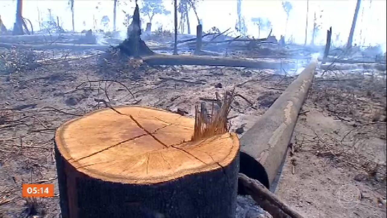 2019 foi o quarto ano com mais incêndios nas florestas do Brasil