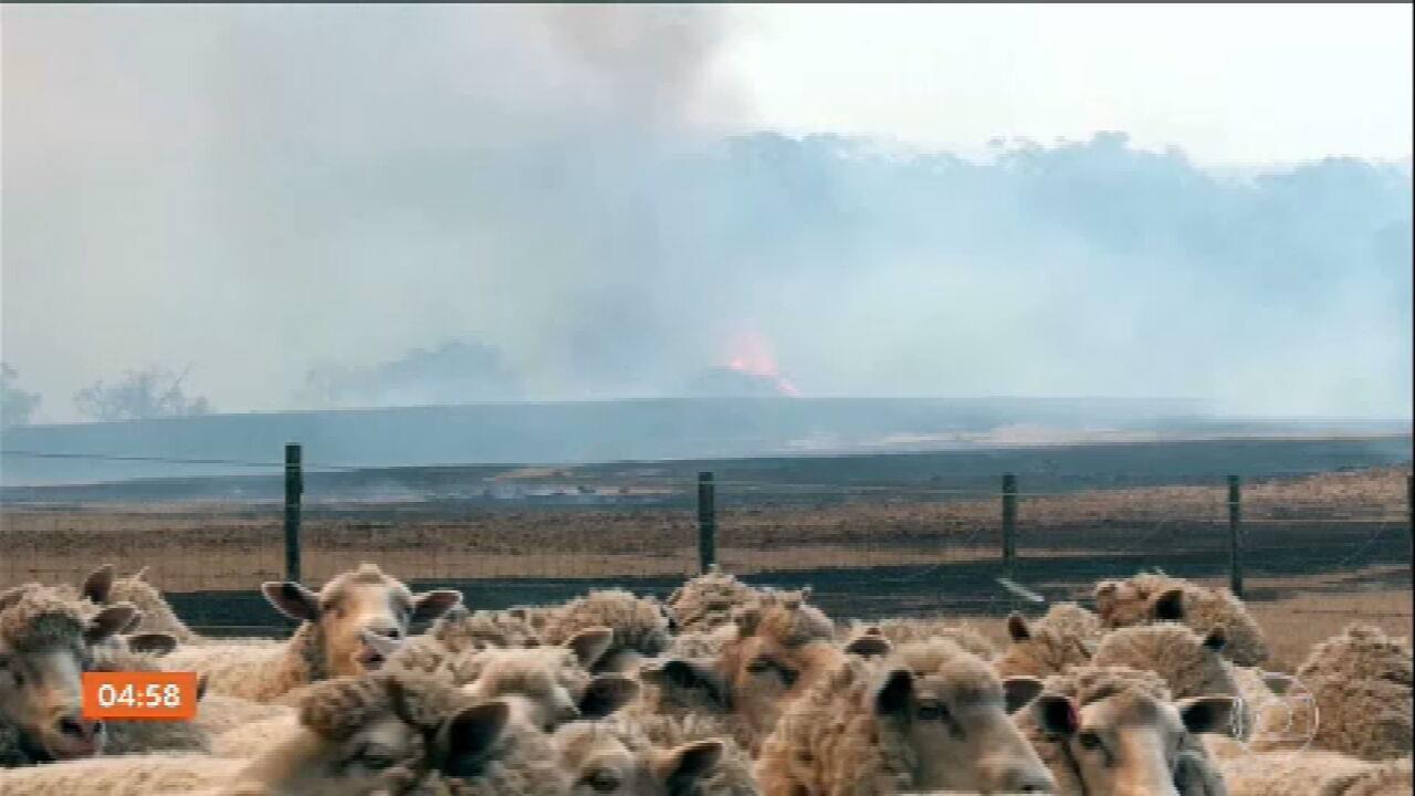 Austrália enfrenta a pior temporada de incêndios florestais em toda a história do país