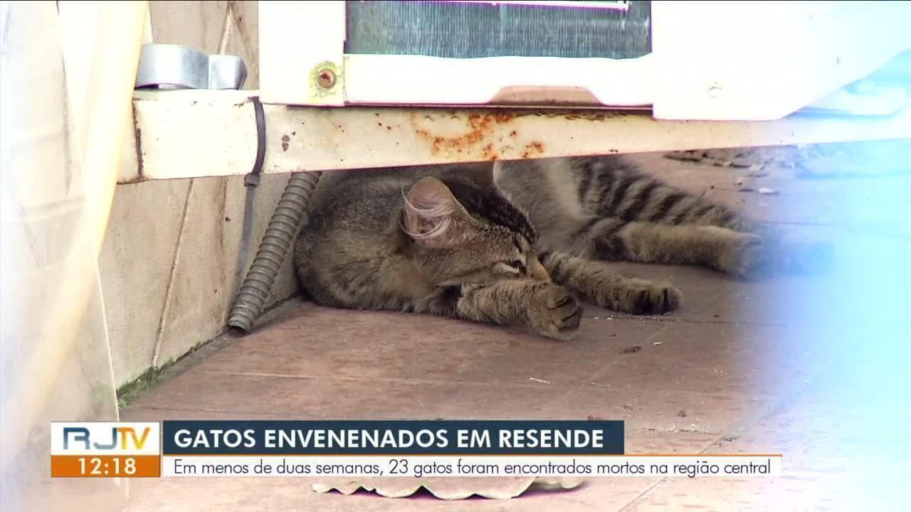 Número de gatos envenenados preocupa moradores de Resende