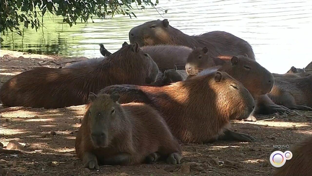 Prefeitura interdita lago municipal de Ipaussu após dois casos suspeitos de febre maculosa