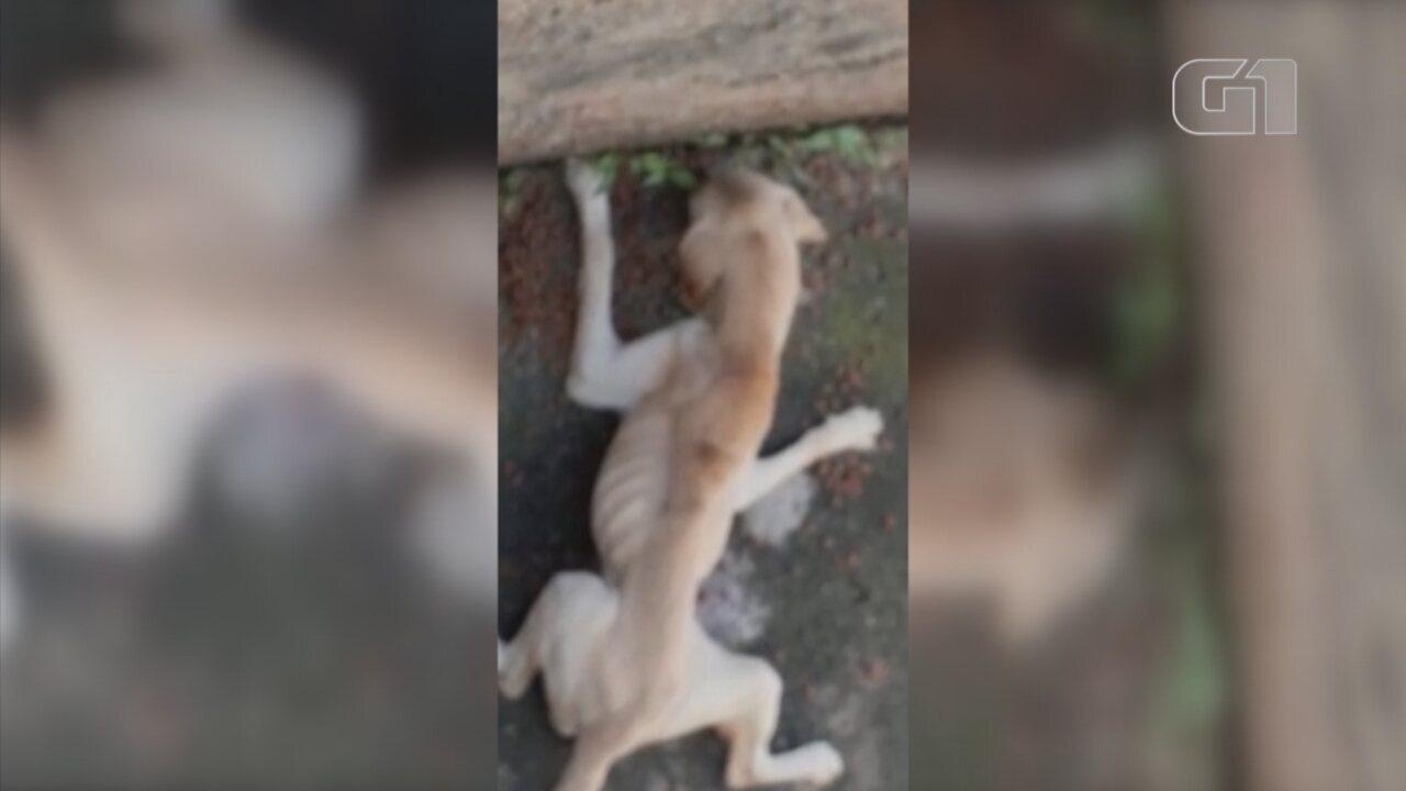 Cães são flagrados em condições de maus tratos em Sorocaba