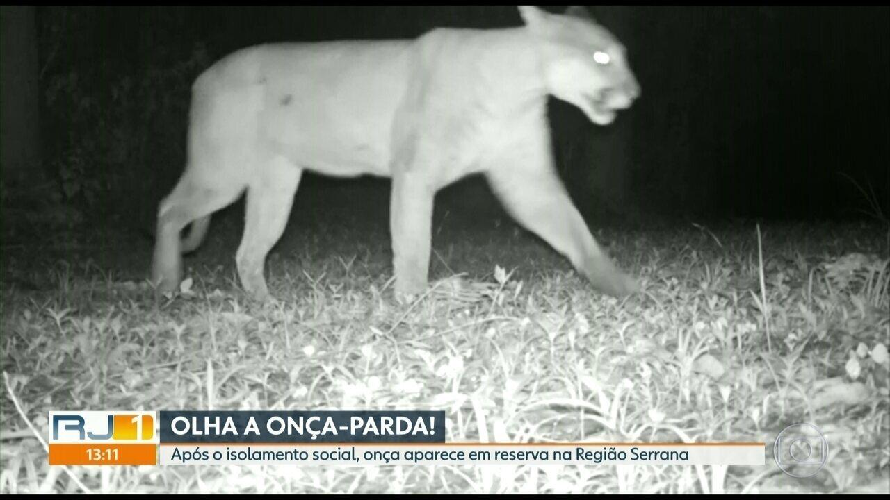 Onça-parda aparece na Reserva Biológica de Araras após isolamento social