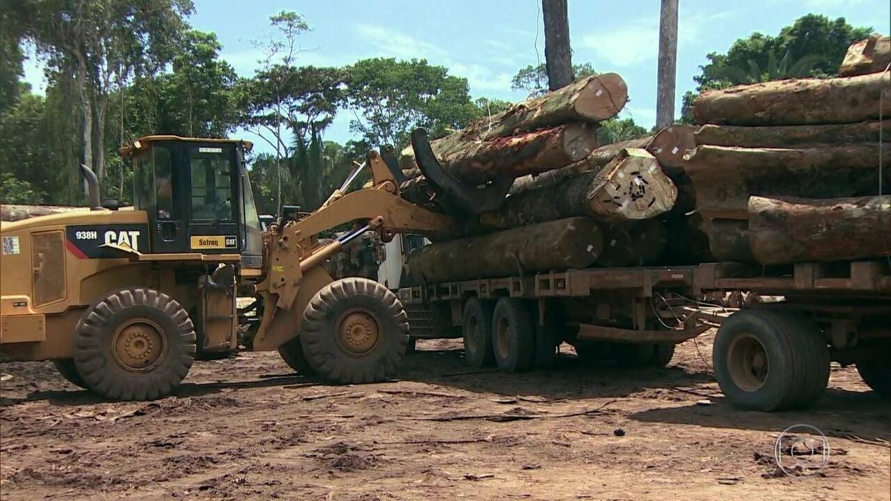 Governo exonera a responsável pelo monitoramento da Amazônia no Inpe
