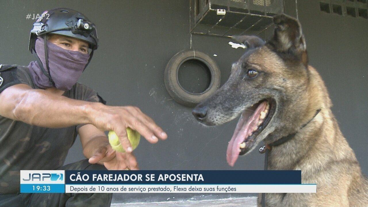 Cadela da Polícia Civil recordista de apreensão de droga se aposenta no Amapá