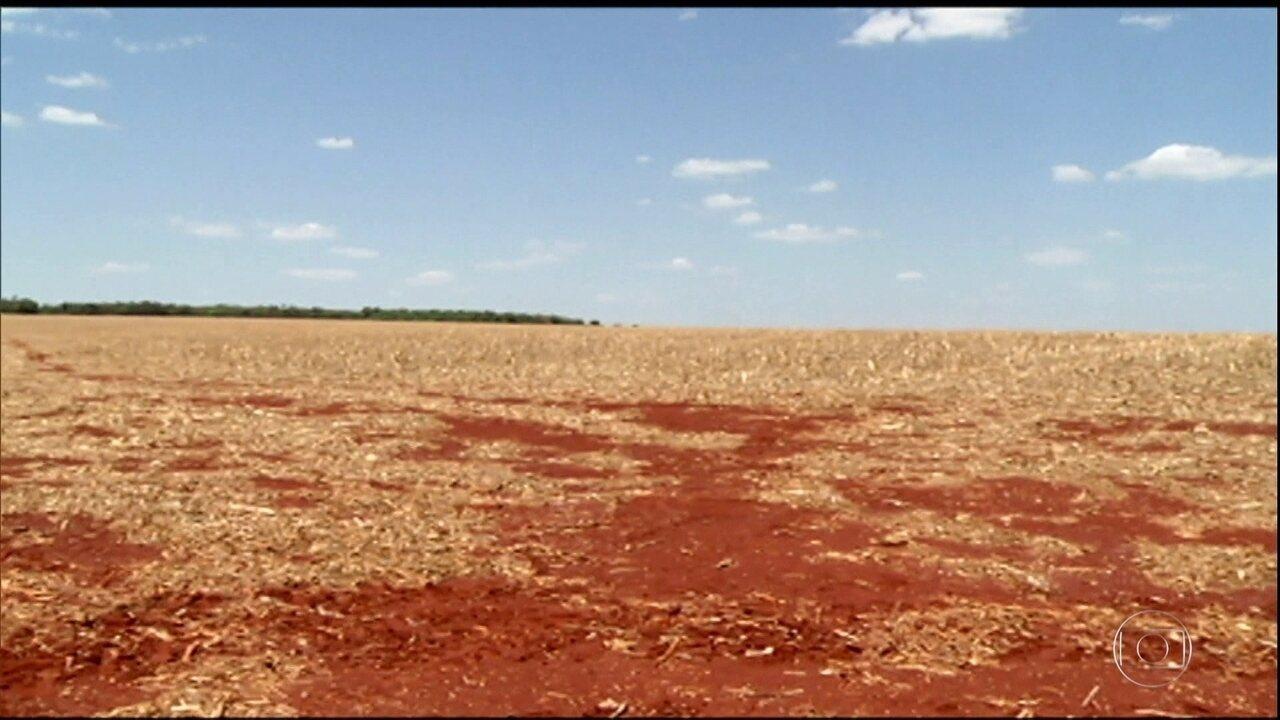 Falta de chuva atrasa o plantio da soja em Goiás
