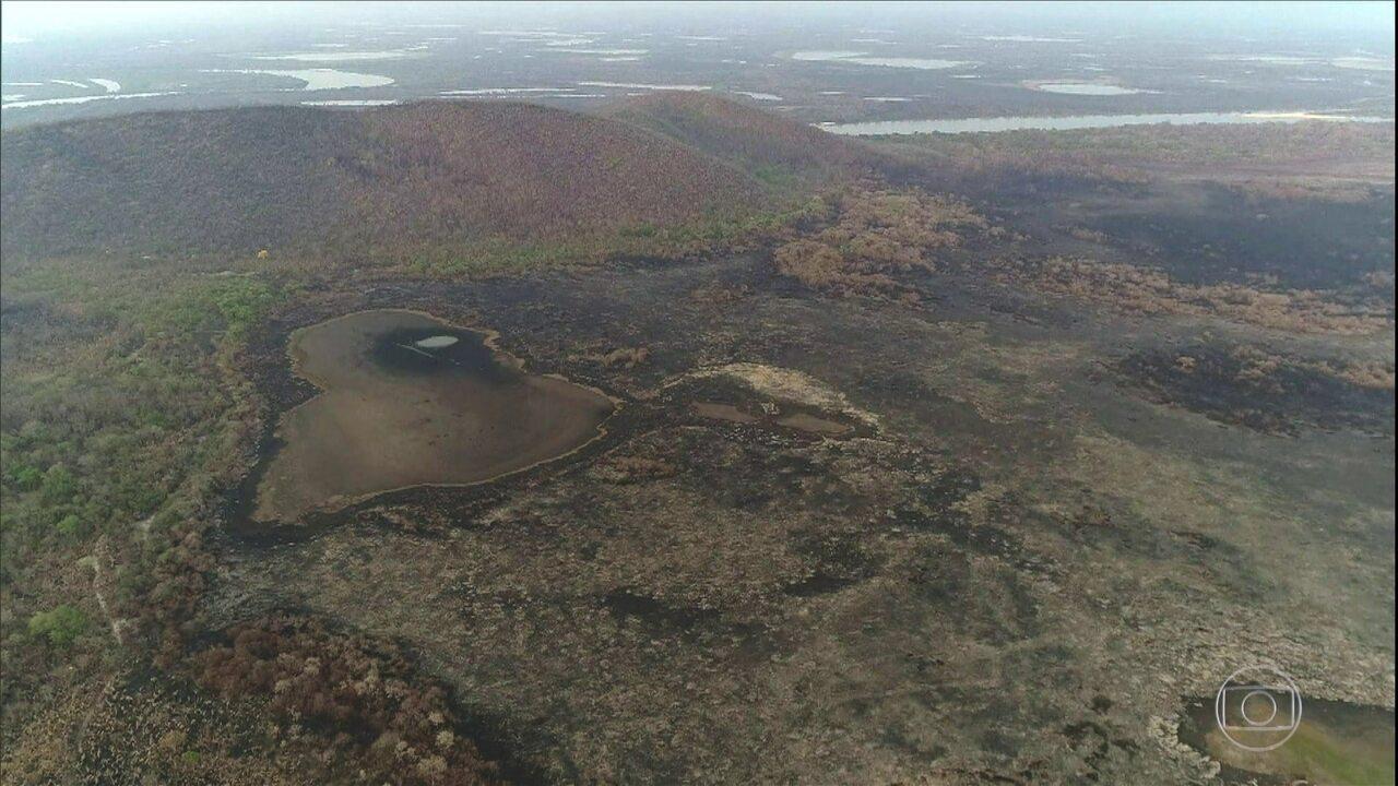 Pesquisadores já avaliam formas de recuperar o Pantanal de MS após queimadas