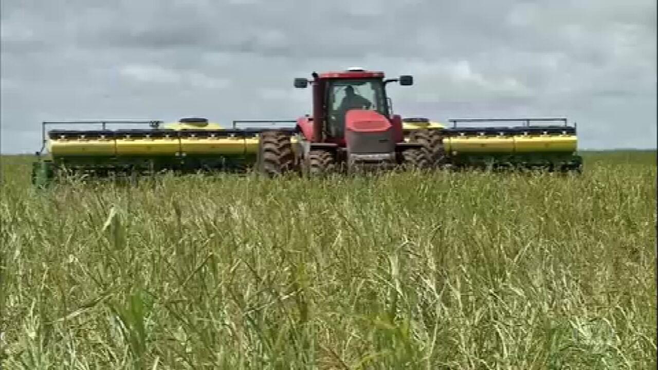 Atraso no plantio da soja prejudica safra de algodão em Mato Grosso