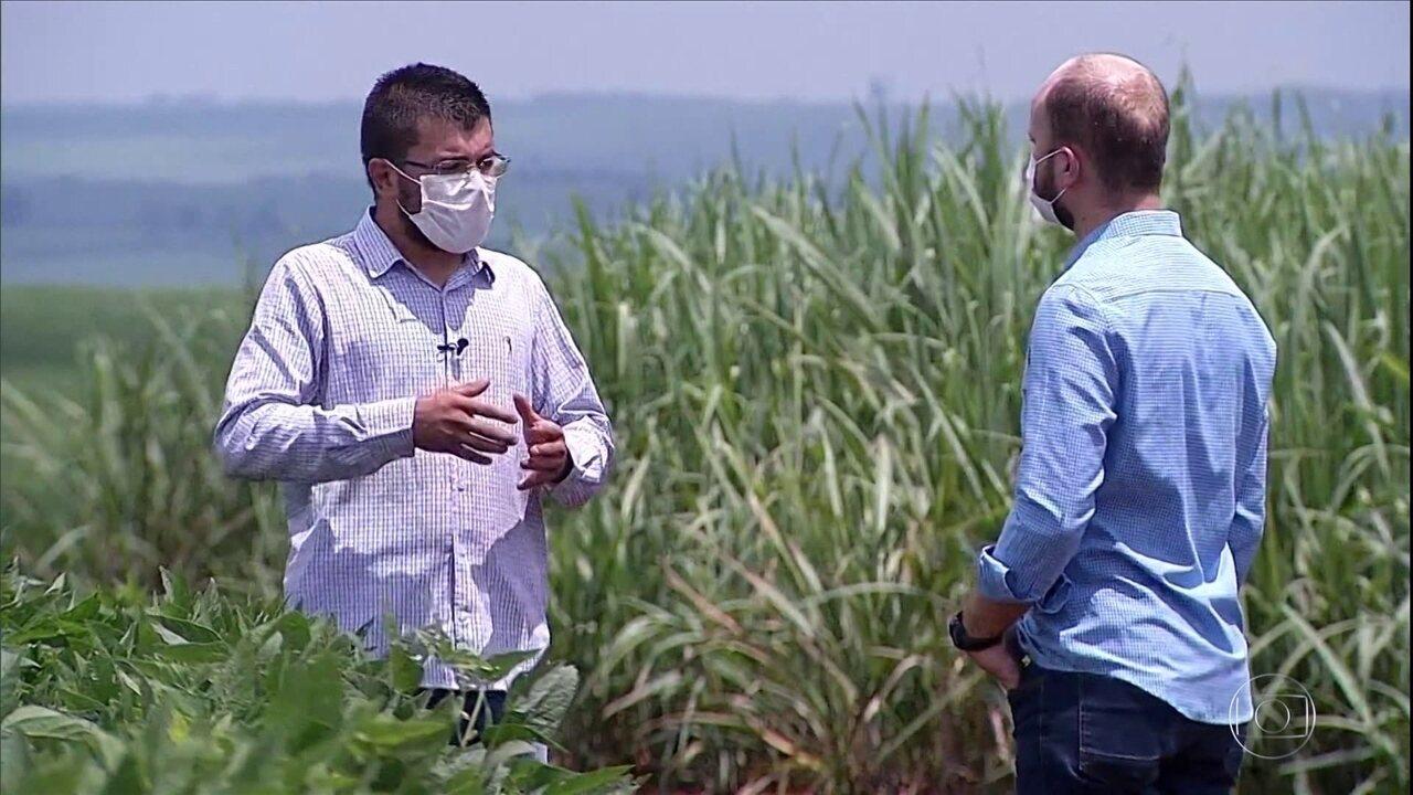 Agricultores trocam cana-de-açúcar por soja em São Paulo