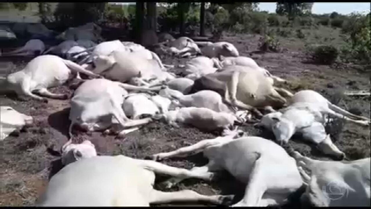Em 10 anos, 2.973 animais já foram mortos no campo por raios no Brasil, aponta Inpe