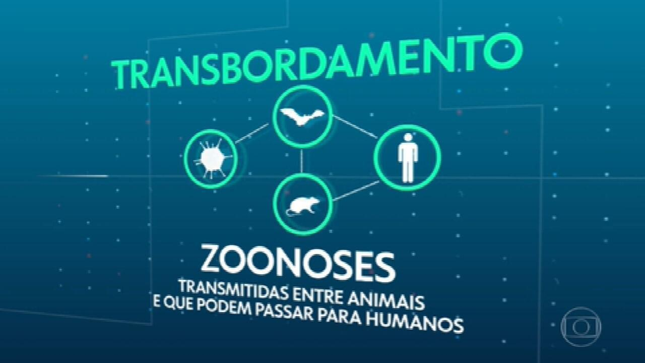Cientistas alertam para a necessidade de preservar o meio ambiente para evitar novas pandemias