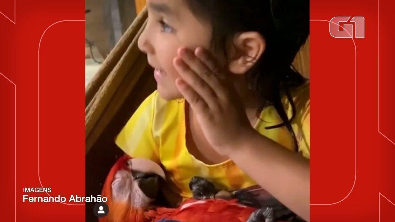 Criança canta cantiga de ninar para Arara dormir em Campo Grande